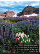 Nature Pocket Folder Meadow (set of 5)