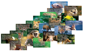 Promise Cards-Wildlife Series (100 Pack)